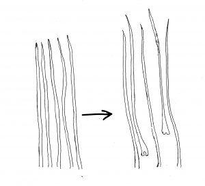 shedding diagram